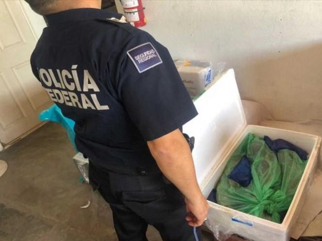 Detectan 28 kilos de totoaba en aeropuerto de Chihuahua