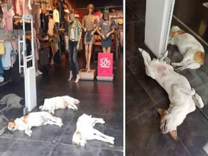 Tienda deja entrar a perritos para protegerse del calor