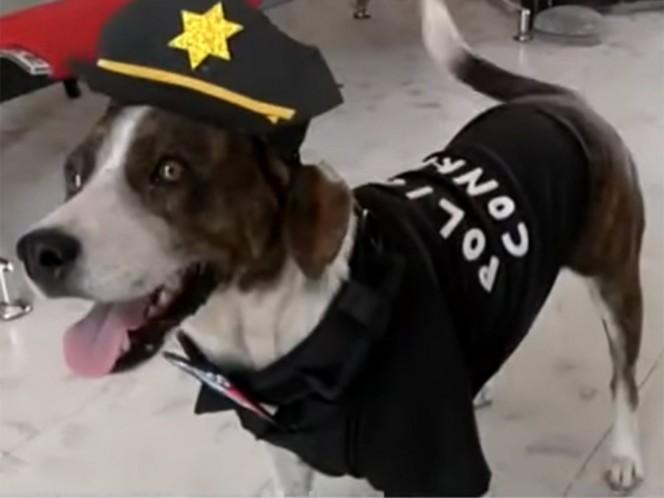 'Chilaquil', el perro policía que vigila las calles de Yucatán