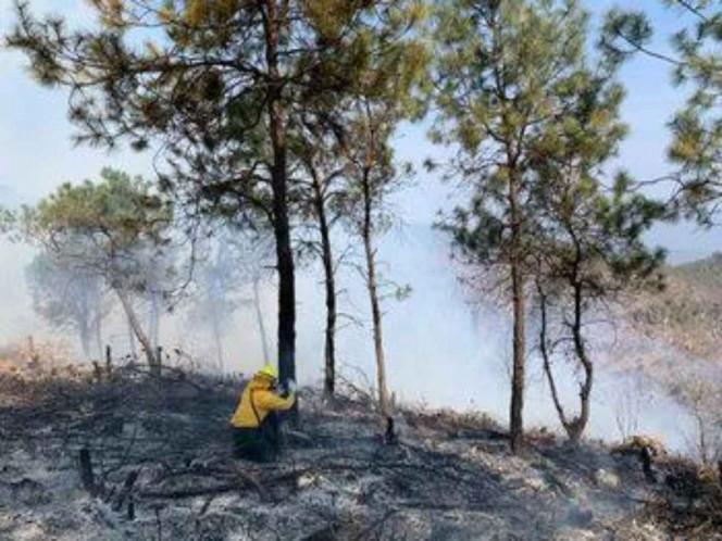 Incendios forestales no ceden, reportan 70 en 16 estados