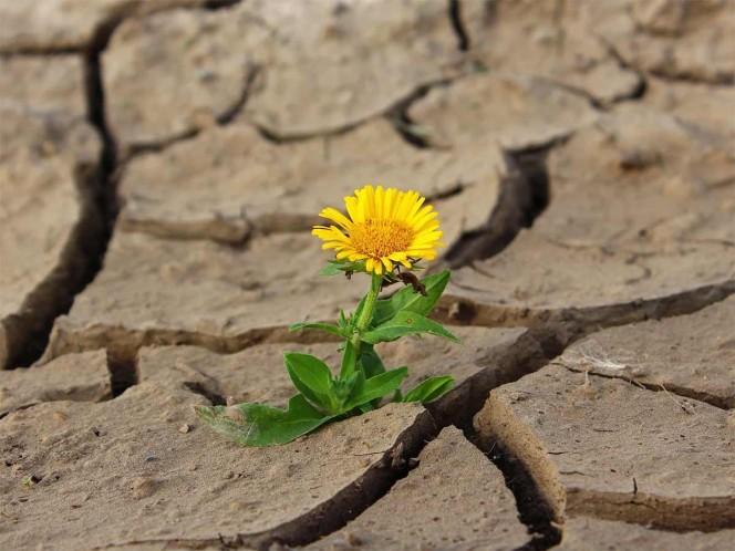 ¡Alerta! Cutzamala con apenas 44% de llenado; se acentúa sequía